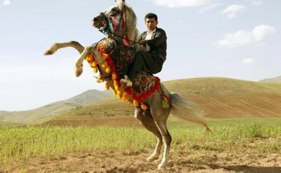 باشگاه خبرنگاران - ثبت جهانی نژاد اسب کرد