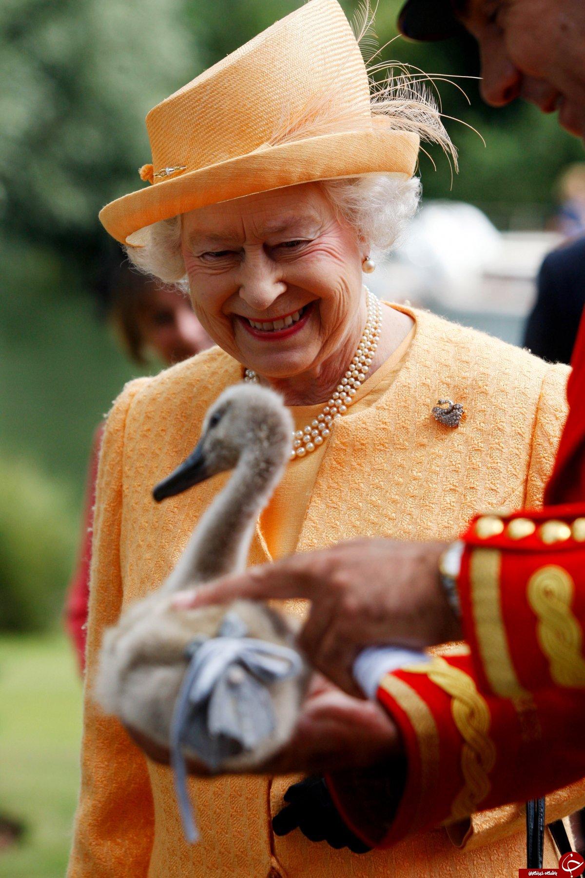 تمام اختیارات عجیب ملکه انگلیس؛ از قدرت عزل نخستوزیر استرالیا تا مالکیت تمام مرغابیها!