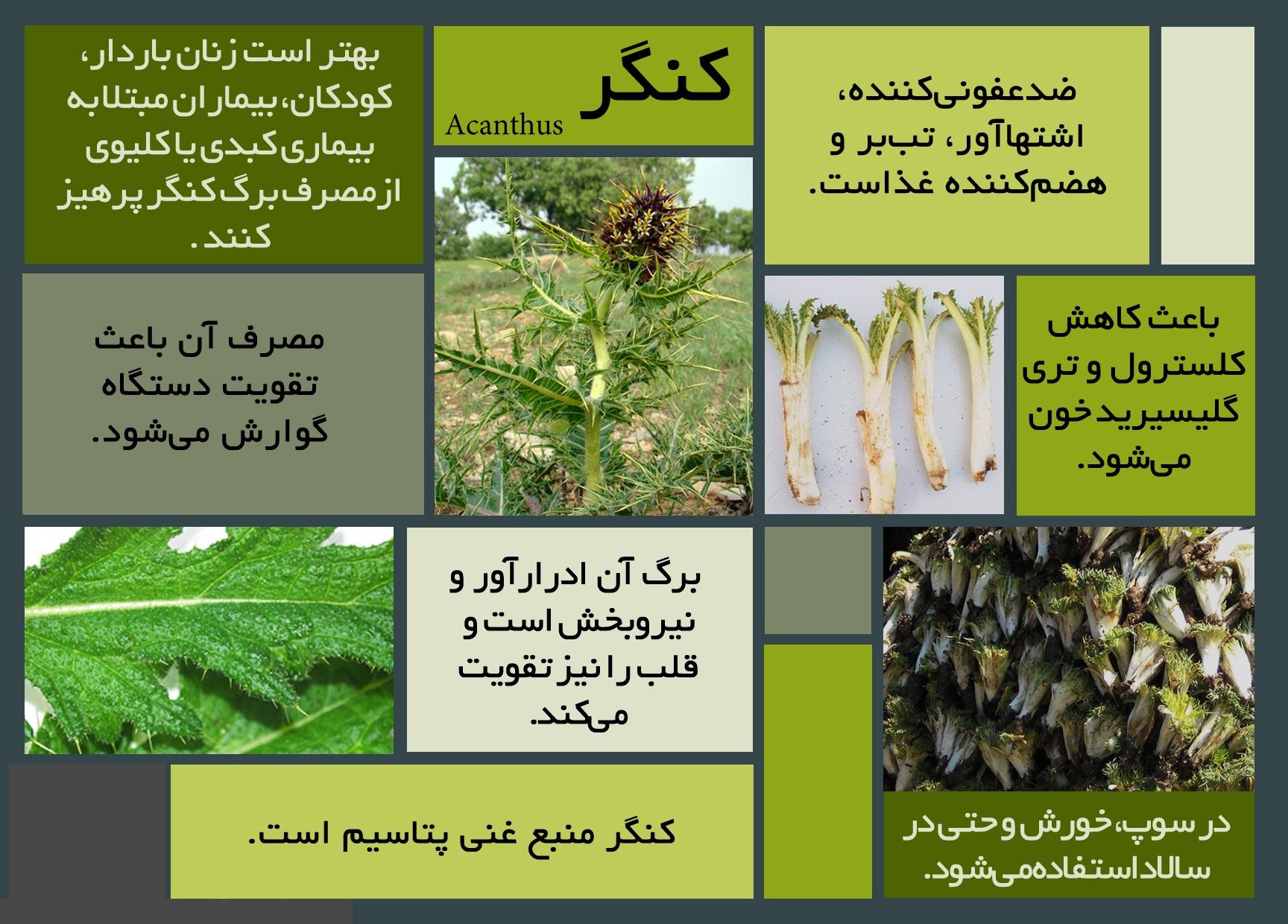 خواص درمانی این سبزی ناشناخته را دست کم نگیرید/ اینفوگرافی