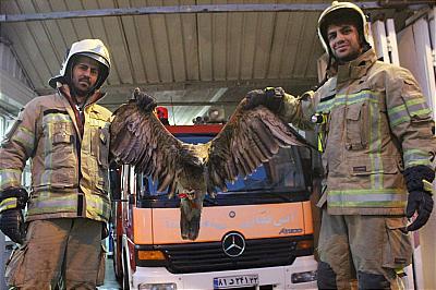 عکس 6237794_290 عقاب پایتخت به دام افتاد