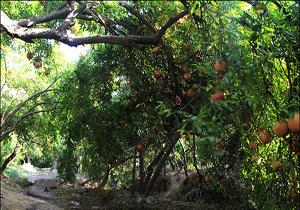 تهران دیگر یاقوت  ندارد/ با تغییر کاربری باغات تهران نابود شدند