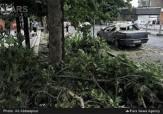 باشگاه خبرنگاران -وقوع 60 مورد حادثه در طوفان پایتخت/ مصدوم و فوتی نداشته ایم