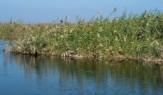 باشگاه خبرنگاران -بررسی نحوه آبگیری و گردش آب در تالاب هورالعظیم
