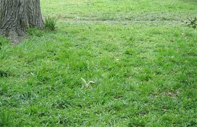 مضرات درخت کهور پاکستانی مضرات درخت کنوکارپوس مضرات چمن کاری محیط زیست چیست کهور پاکستانی قیمت مالچ فواید درخت روز درختکاری درختان غیر مثمر درخت مثمر چیست چگونه از محیط زیست حفاظت کنیم انشا در مورد فواید درخت و درختکاری اخبار خوزستان
