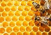 باشگاه خبرنگاران - افزایش 50 درصدی تعداد کلنی های تولید عسل در شهرستان نمین