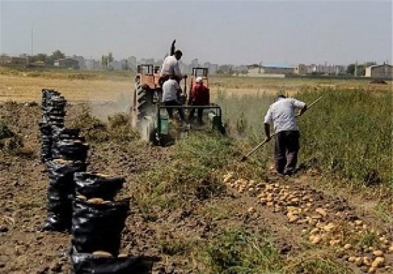 باشگاه خبرنگاران - کشت سیب زمینی در اراضی دشت اردبیل آغاز شد