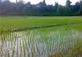 باشگاه خبرنگاران -افزایش 7 برابری اعتبارات جهاد کشاورزی گلستان