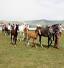 باشگاه خبرنگاران -رقابت 150 سر اسب در جشنواره ملی اسب ترکمن
