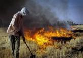 باشگاه خبرنگاران - برخورد قانونی محیط زیست فارس با متخلفان کشاورز