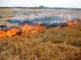 باشگاه خبرنگاران - ۳۰ هکتار از مزارع موسیان دهلران در آتش سوخت