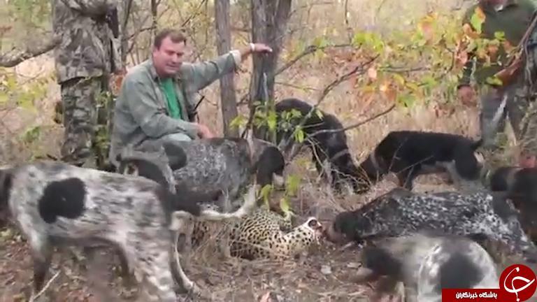 شکارچی قهار، بطرز فجیعی خود نیز شکار شد + تصاویر