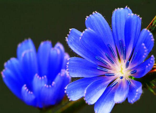این دمنوشهای گیاهی را جایگزین نوشابههای انرژی زا کنید