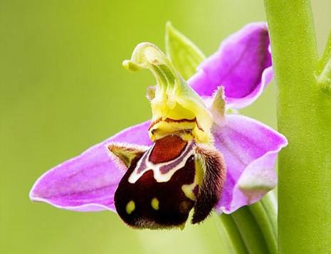 عجیب و غریبترین گلهای جهان را ببینید+تصاویر