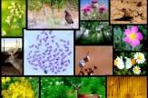 تنوع زیستی جاذبه ای برای گردشگری پایدار/گردشگری کاستاریکا در ریل پیشرفت