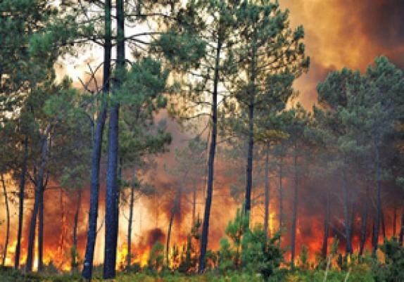 باشگاه خبرنگاران - داستان تکراری آتش سوزی جنگل های کهگیلویه و بویر احمد