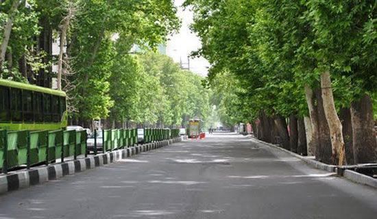 چه بلایی بر سر درختان توت و چنار تهران آمد؟/عاقبت آلودگی هوا به نابودی درختان کهن انجامید