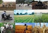 باشگاه خبرنگاران -کمبود سردخانه، کشاورزی تربت جام را تحت تاثیرقرارداده است