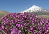 باشگاه خبرنگاران -طبیعت زیبای دامنه کوه دماوند + تصاویر