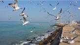 باشگاه خبرنگاران - خلیج فارس متلاطم می شود