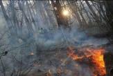 باشگاه خبرنگاران - آتش به جان درختان /مرگ تدریجی طبیعت محلات + تصاویر