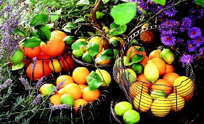 میوه هایى كه هر روز باید بخورید تا آلزایمر نگیرید