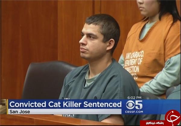 «16 سال حبس» مجازات قاتل گربهها +عکس