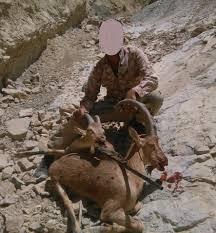 عکس یادگاری شکارچی متخلف را به دام قانون انداخت