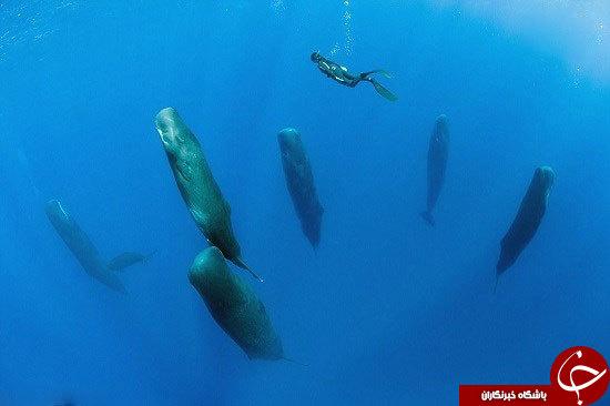 نهنگ عنبر چطور میخوابد؟