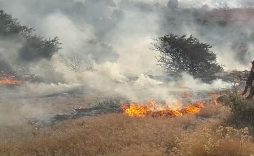 سوختن جنگلهای بلوط در آتش + فیلم