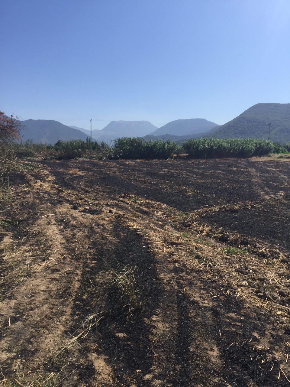 آتش بقایای کشاورزی به جان جوجه ها افتاد +تصاویر