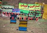 باشگاه خبرنگاران -با فروشندگان عسل در حاشیه جادهها  برخورد جدی می شود