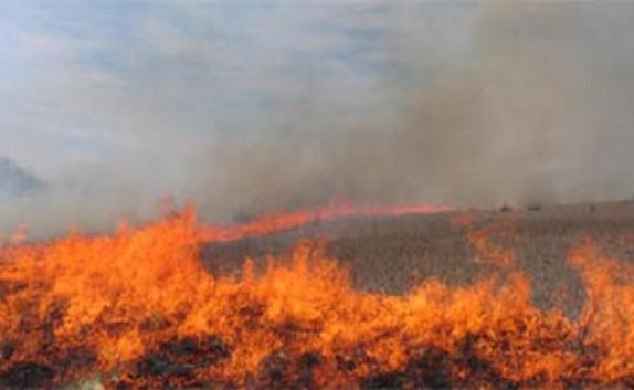 باشگاه خبرنگاران -آتش گرفتن مزارع کشاورزی جاده ورامین + فیلم