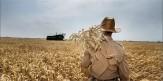 گندمگاران تا کی تاوان بدحسابی دولت را بدهند؟