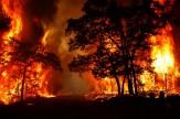 باشگاه خبرنگاران -آتشسوزی ۳ هکتار از تفرجگاه ساحلی ارس