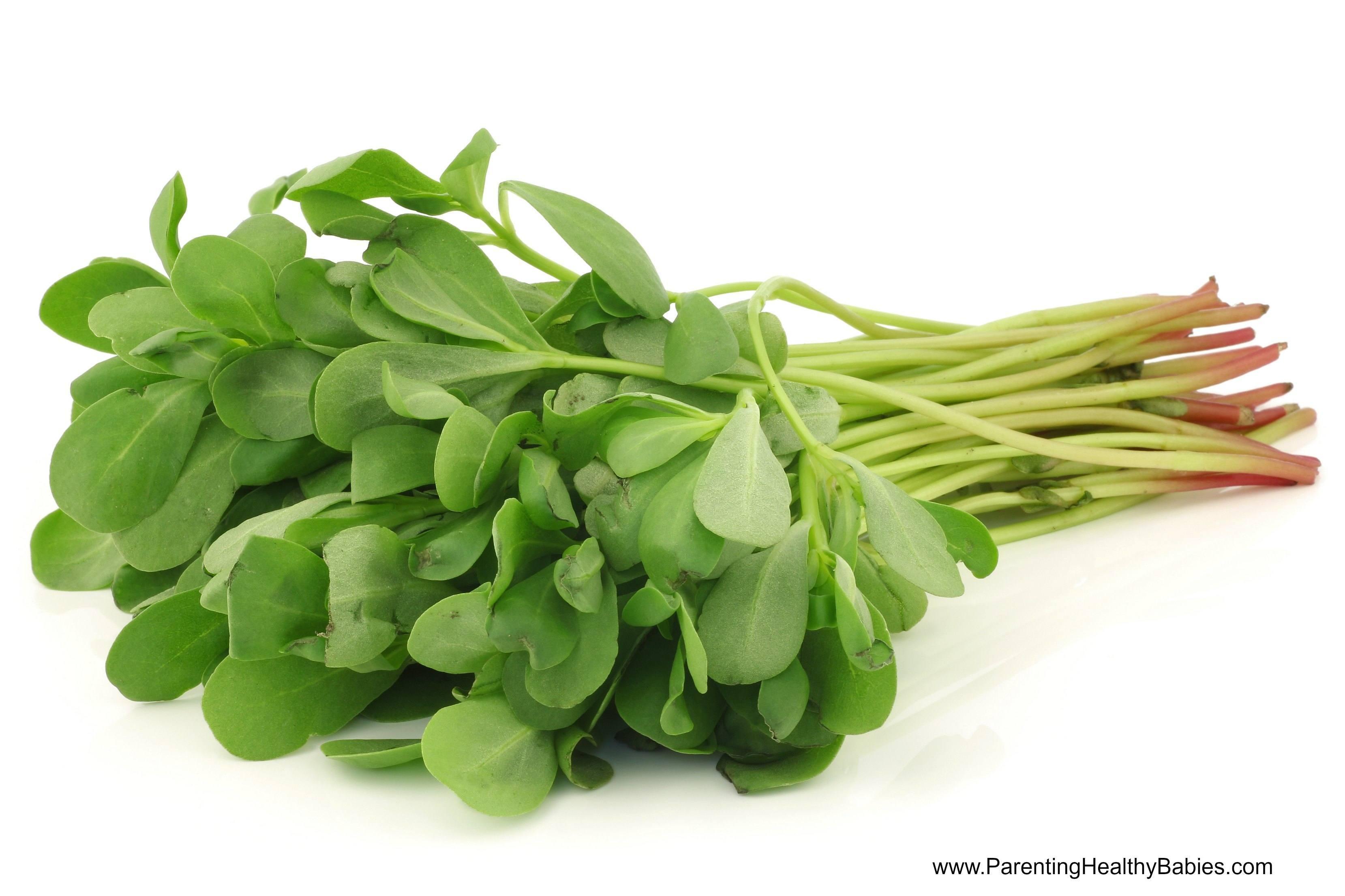سبزی خرفه؛ جادوی طبیعت