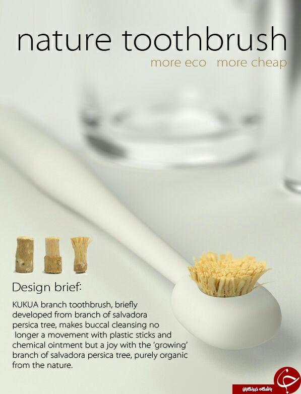 «چوب مسواک اراک» جایگزین مسواکهای معمولی در کشورهایی اروپایی + جزئیات و فواید