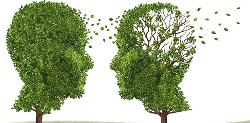 این سبزی باعث زنگ زدن سلولهای مغزی میشود