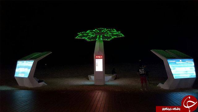 نخلهای دبی هوشمند و خورشیدی میشوند+ عکس
