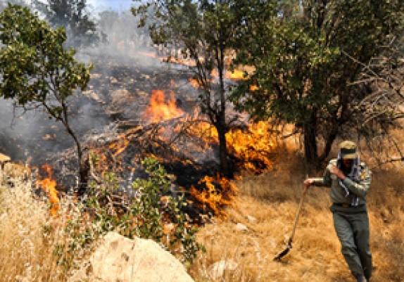 باشگاه خبرنگاران -آتش سوزی در 282 هکتار از جنگل های کهگیلویه وبویراحمد