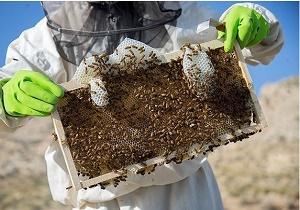 چگونه «عسل طبیعی» را از عسل تقلبی تشخیص دهیم/ همه آنچه از عسل نمی دانید