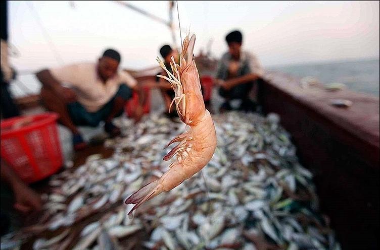 صیادان استان بوشهر ۱۰۰۰ تن میگو صید کردند