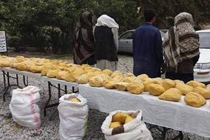 بازداشت سه قاچاقبر مواد مخدر در میدان هوایی کابل