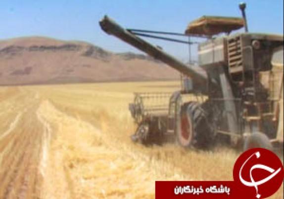خرید ۳۶۰ هزار تن گندم از گندمکاران لرستانی