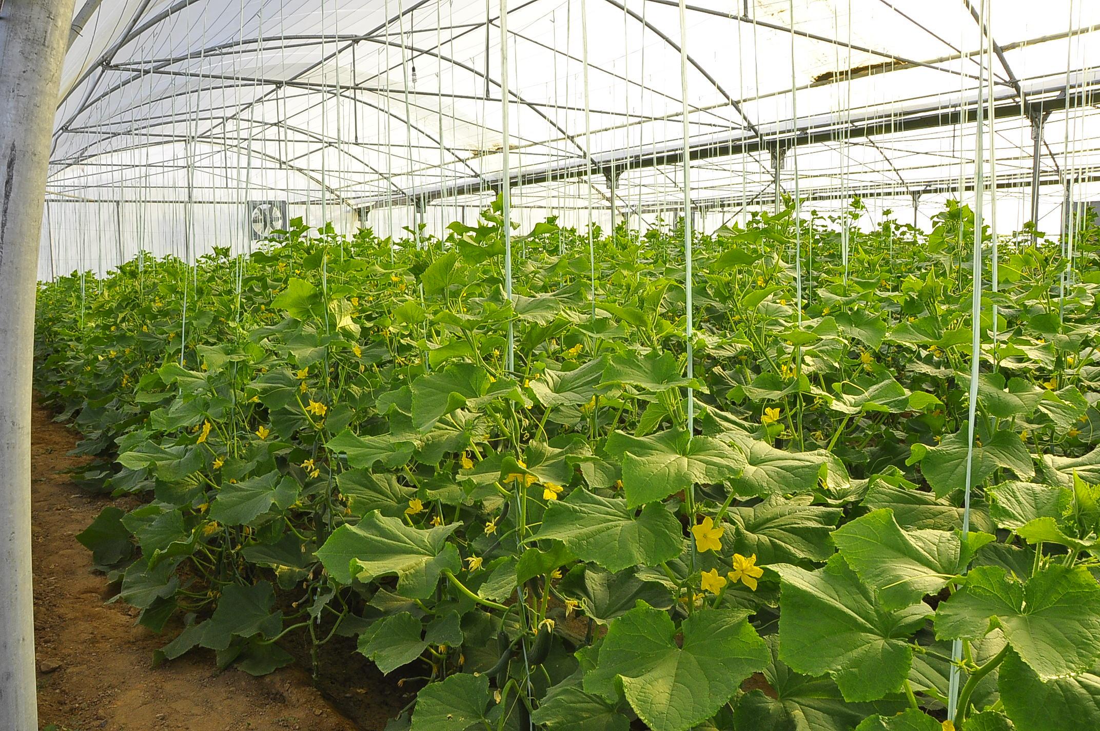 پرداخت 658 میلیارد ریال تسهیلات به واحدهای تولیدی کشاورزی در زنجان