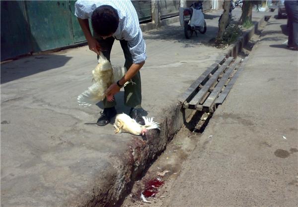 ممنوعیت کشتار و عرضه مرغ زنده خارج از محیط کشتارگاه