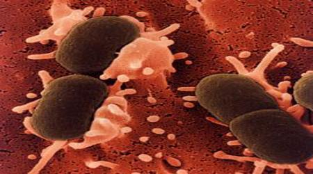 عفونت قارچی نتیجه ورود آلودگیهای محیطی به گوش میانی/ کاهش PH گوش را جدی بگیرید