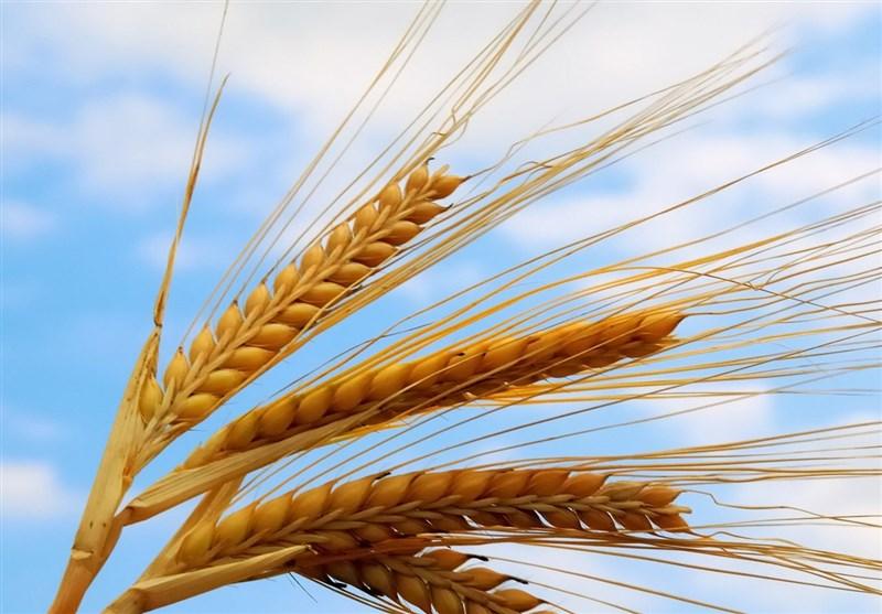 بسیج همگام با کشاورز، حرکت در پیشرفت اقتصادی کشور