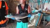 باشگاه خبرنگاران -کشته شدن بچه دلفین به دست سلفیبگیران+ تصاویر