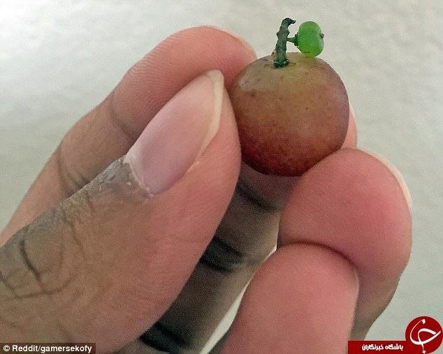 میوههای عجیب الخلقه در سراسر جهان+ تصاویر