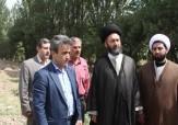 باشگاه خبرنگاران -نهضت درختکاری در استان اردبیل در حال تحقق است